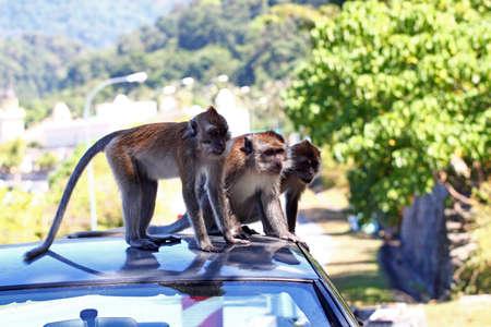 langkawi: Langkawi Malaysia monkeys