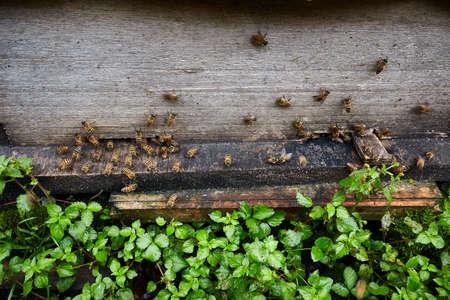 hard core: Beehive door Stock Photo
