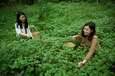 anticoagulant: ladies Picking Mugwort