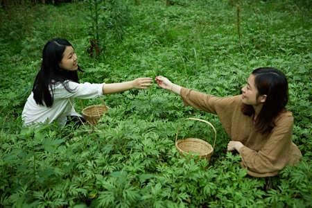 ladies Picking Mugwort
