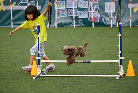 induce: Dog agility
