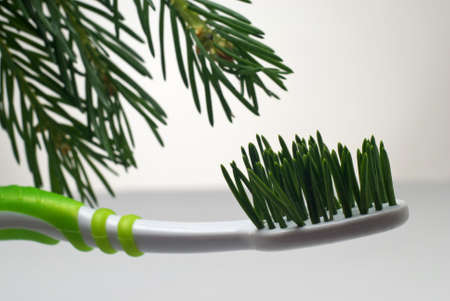 Toothbrush with bristle made from fir needles with fir branch in background