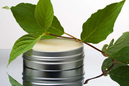 Fresh plant lying on opened salve container Stock Photo