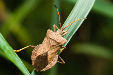 Close up of bug sitting on grass