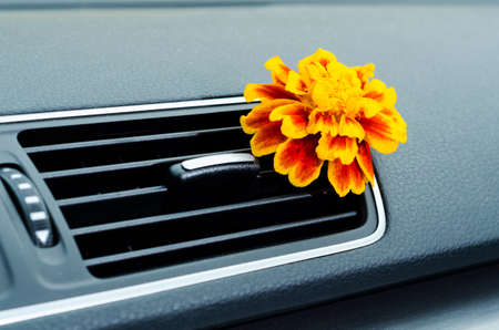 dashboard: Flower in car interior ventilation as a natural air freshener Stock Photo
