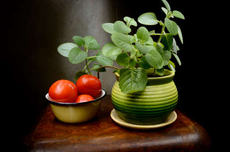 Still Life with Potted basil and tomatoes in a bowl