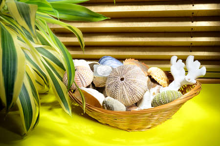 Composition of Sea Urchin shells, seashells and corals in basket Stock Photo