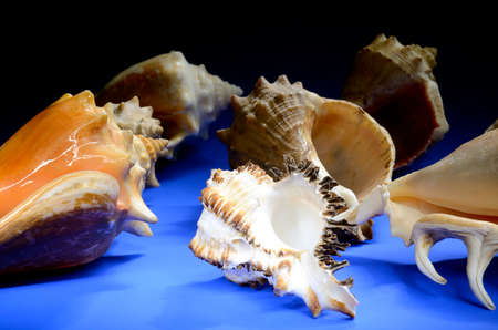 Collection of sea shells on blue background Stock Photo