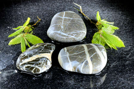 Wet pebble stones and branches with leaves
