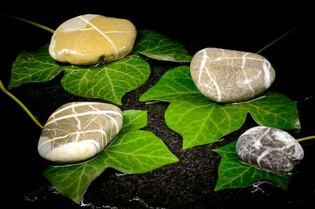Wet ivy leaves and pebble stones on its Stock Photo