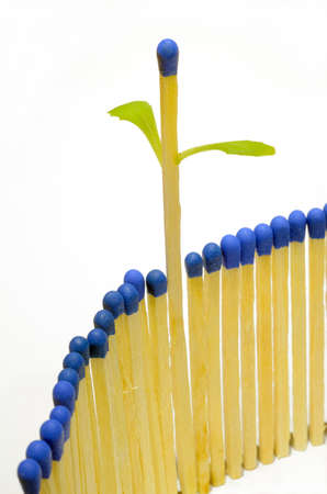 Matchsticks in a row with one come into leaf, on white background