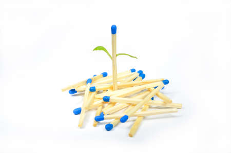Stack of matchsticks with one come into leaf, on white background Stock Photo