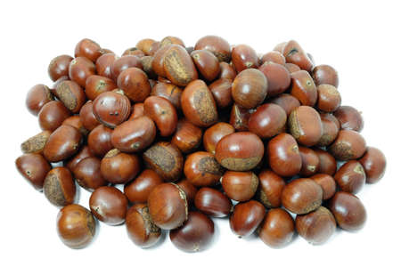 fagaceae: Castanea mollissima (Chinese chestnut) is a member of the family Fagaceae, and a species of chestnut native to China, Taiwan, and Korea. Stock Photo
