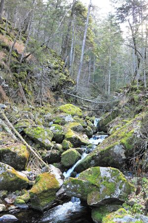 proceeding: Stream proceeding among stones covered with  moss Stock Photo