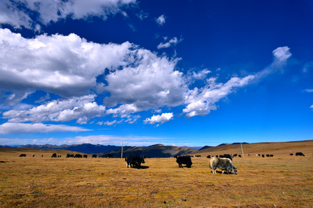 Western Sichuan Plateau landscape scenery view