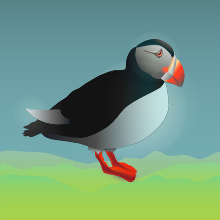 webbed: colour vector illustration of the side view of a standing puffin Illustration