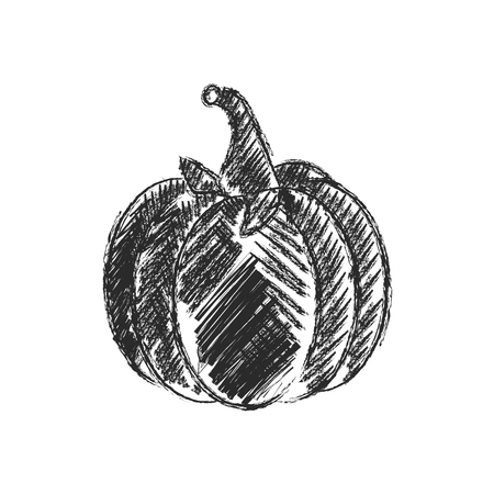 stocky: Vector Single Sketch Pumpkin Illustration