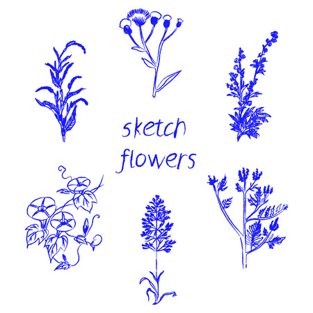 herbal background: Hand drawn herbal flowers isolated on white background vector illustration Illustration