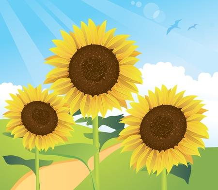 Summer Sunflower Landscape Vector