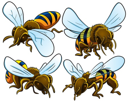 an insect sting: Bees Collection