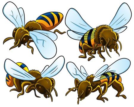 avispa: Las abejas Colección