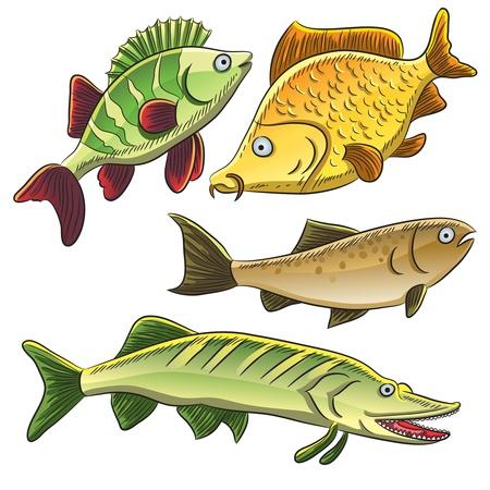 민물의: 물고기 컬렉션