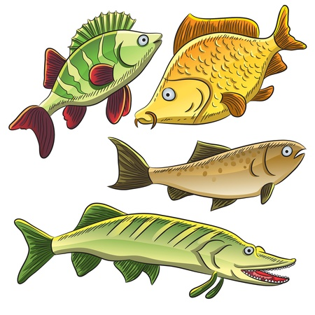 freshwater fish: Fish Collection Illustration