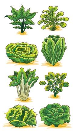 Groene groenten Collectie Vector Illustratie