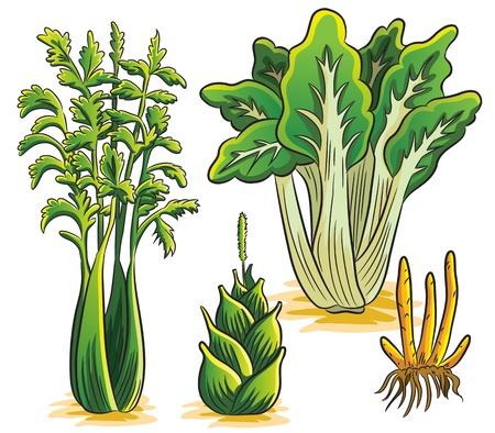 fennel: Verduras Green Collection Vectores