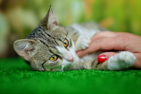 Stroking cats lying on green background Stock Photo
