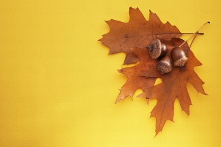 acorns with leaf on yellow background. Soft light Stock Photo