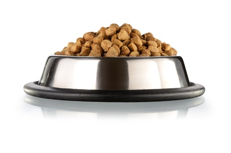 kibble: Cats and dogs dry food  in the stainless steel bowl