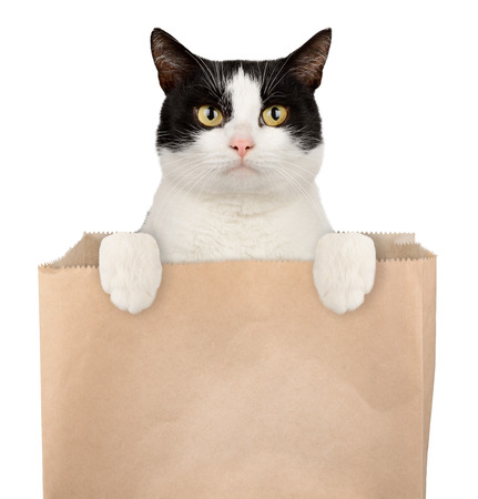 Cat in shopping bag isolated on white background. Pet shop concept photo