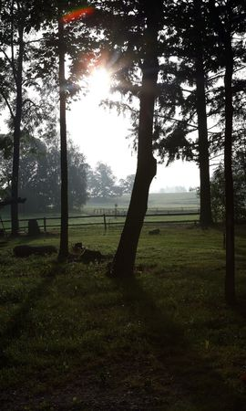 Spooky forest in the morning at the end of summer photo