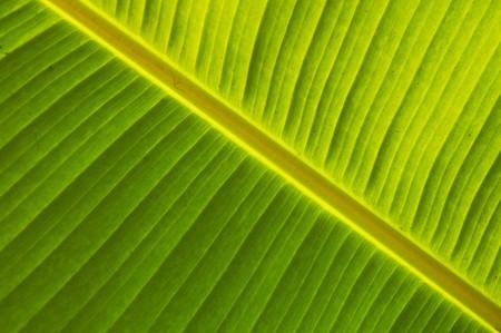 Detail der grünes Blatt, der in der Nähe Wasserfall Agua Azul in Mexiko