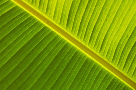 Detail of green leaf growing near waterfall Agua Azul  in Mexico Stock Photo
