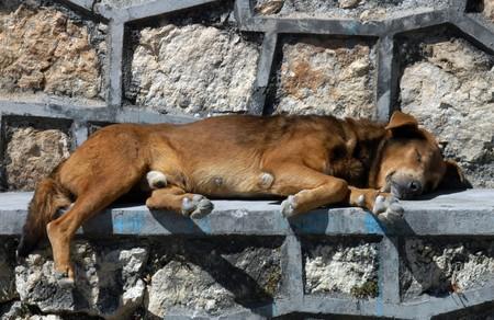 Dog sleeping on the street in San Cristobal photo