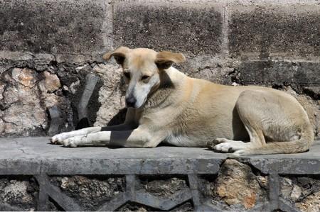 Dog lying on the street in San Cristobal photo