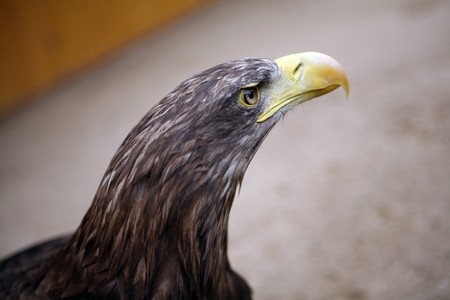 Eagle in the ZOO photo