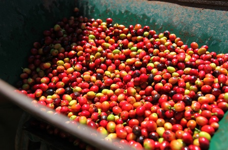 Coffee beans in the machine