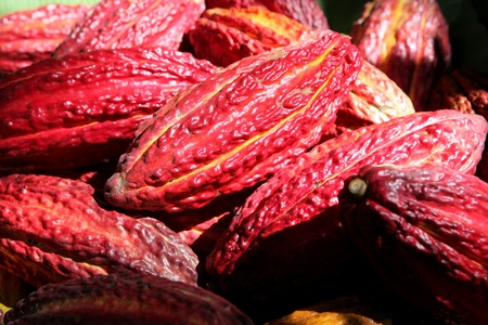Cocoa pods, Peru Stock Photo