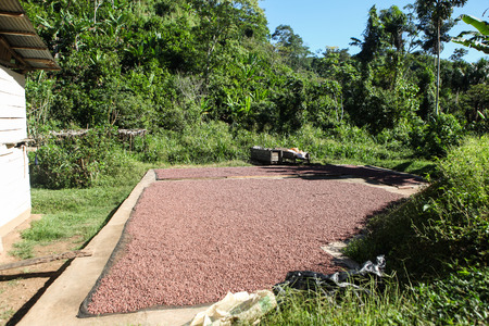 A place for collection and drying cocoa beans in Huayhuantillo village, Tingo Maria, Peru, 2011 Reklamní fotografie