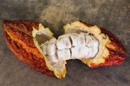 residue: A detail view of a cut opened cocoa pod in Huayhuantillo village near Tingo Maria in Peru, 2011