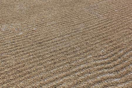 cooperativismo: El secado de los granos de café en el patio del cooperativa Naranjillo en Tingo María, Perú 2011 Foto de archivo