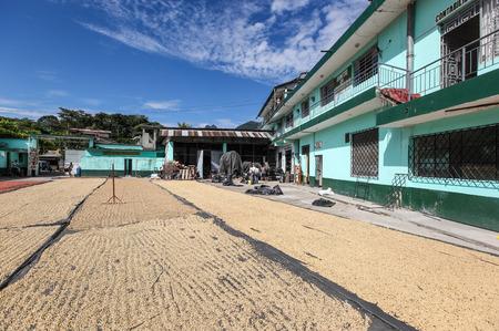 cooperativismo: TINGO MARIA, PERU - JUNE 22: The drying of coffee beans in courtyard of Naranjillo cooperative in Tingo Maria, Peru 2011