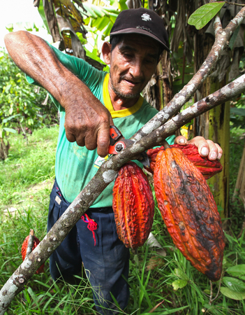 residue: TINGO MARIA, PERU - JUNE 22: A view of the cocoa growers from Naranjillo cooperative in rainforest nearby Tingo Maria in Peru, 2011 Editorial