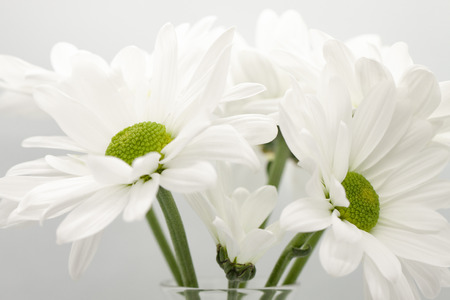 Daisies in a glass vase on gray background