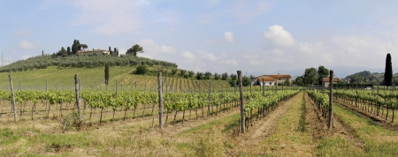 Panoramic valley in Tuscany Italy, vines and olive groves photo