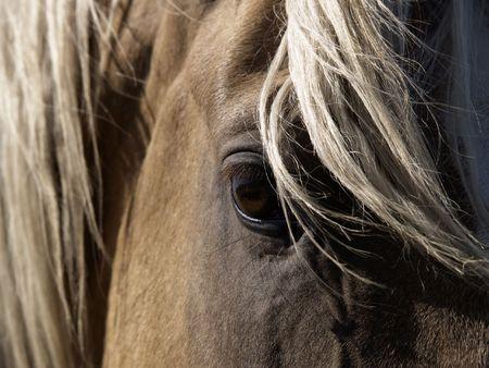 A close-up of a palomino horses eye. photo