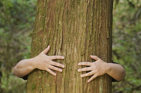 clinging: A person hugs a large tree